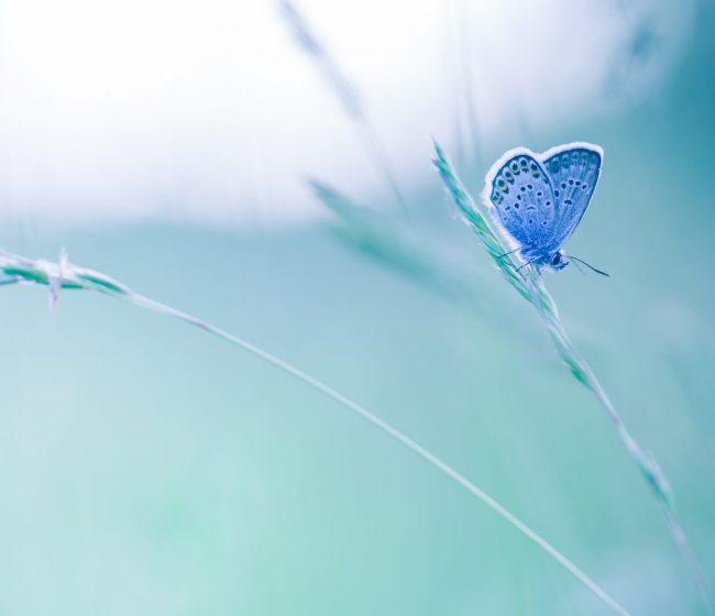 Nature,Background,Concept.,Beautiful,Summer,Meadow,Background.,Inspirational,Nature,Closeup.